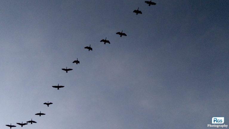 The Sky Birds