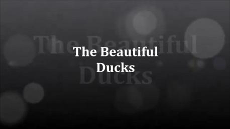 The Beauitful Ducks